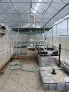greenhouse auto watering system