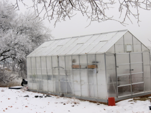 winter greenhouse gardening